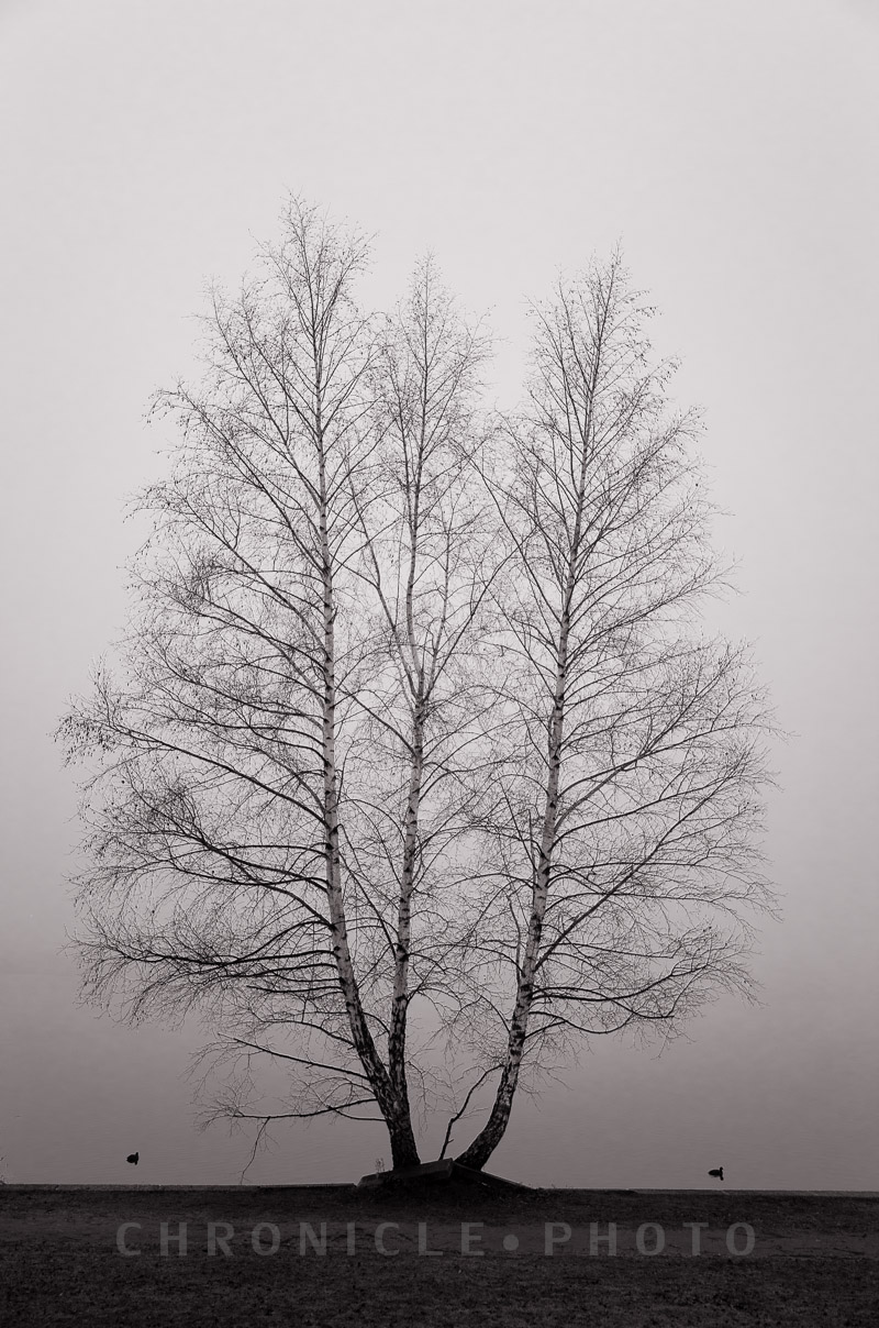 Morning Fog, Green Lake, 2014