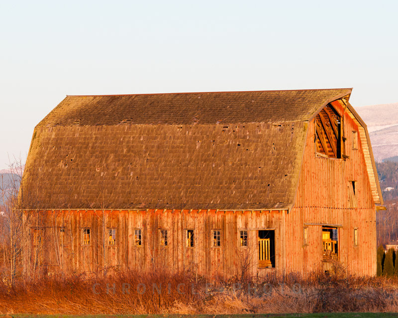 Barn, Skagit Valley, 2010
