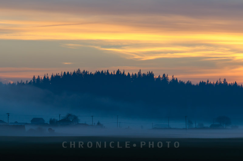 Evening Fog - 1, 2014