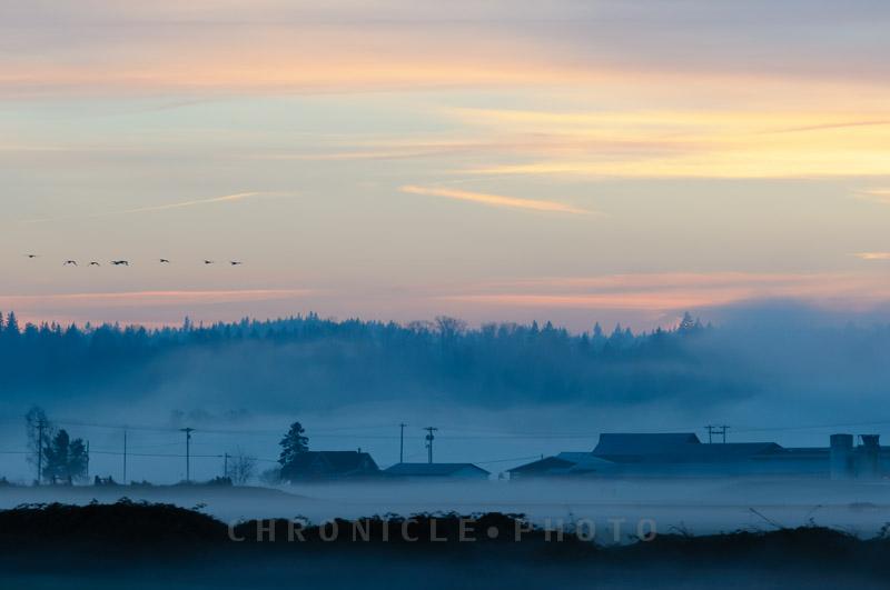 Evening Fog - 2, 2014