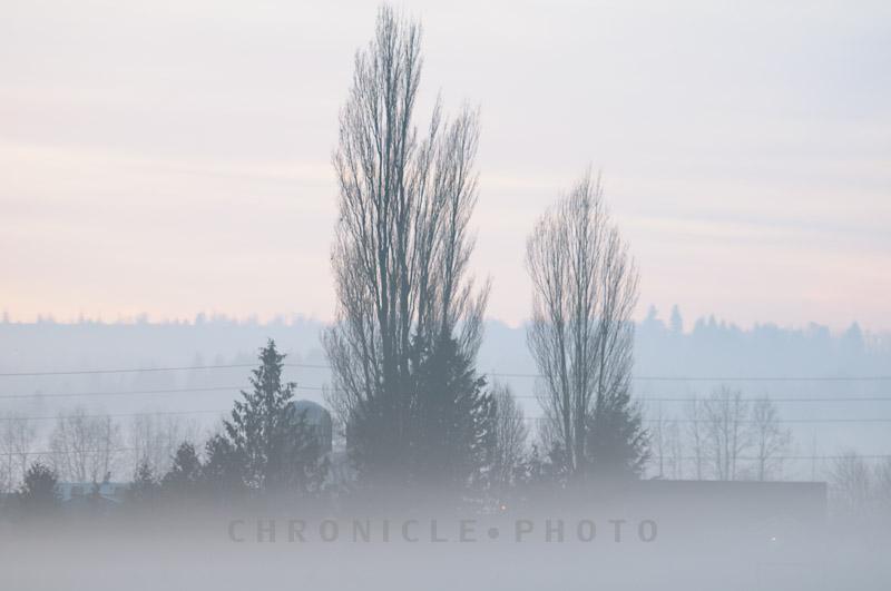 Evening Fog - 3, 2014