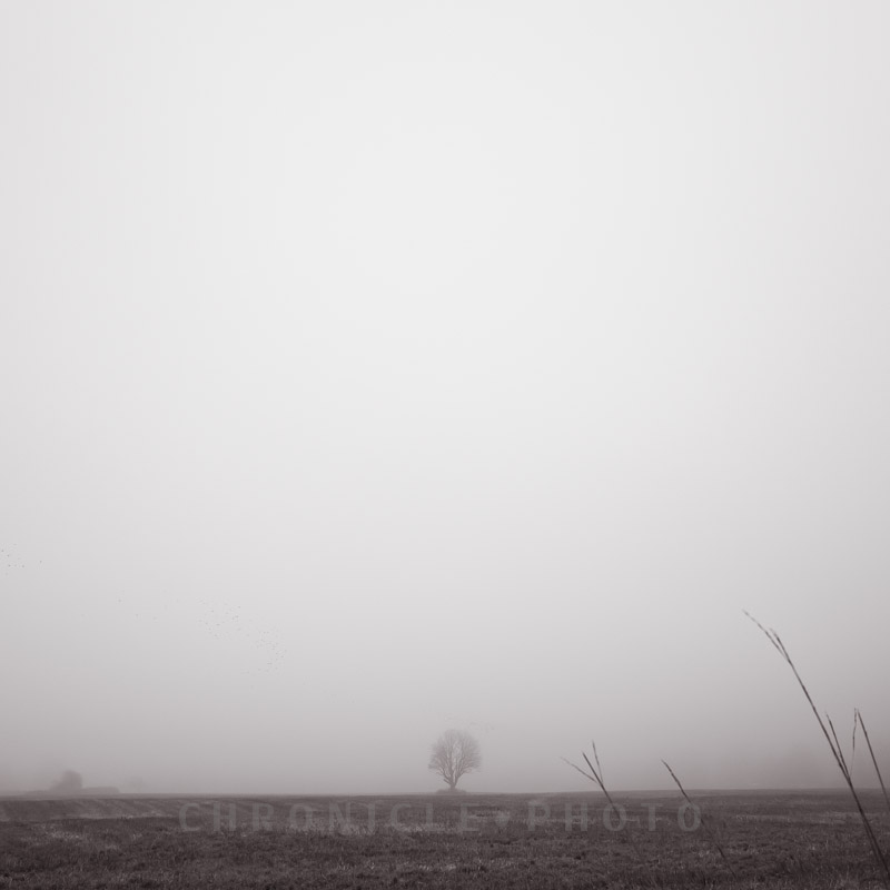 Winter Fog, 2014