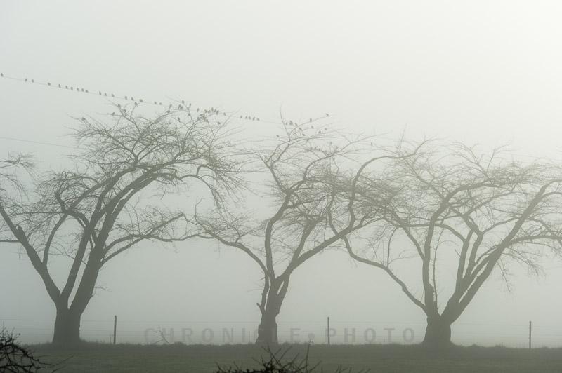 A Foggy Memory, 2014